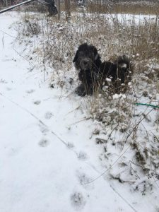 Nalo findet den Schnee ganz spannend!